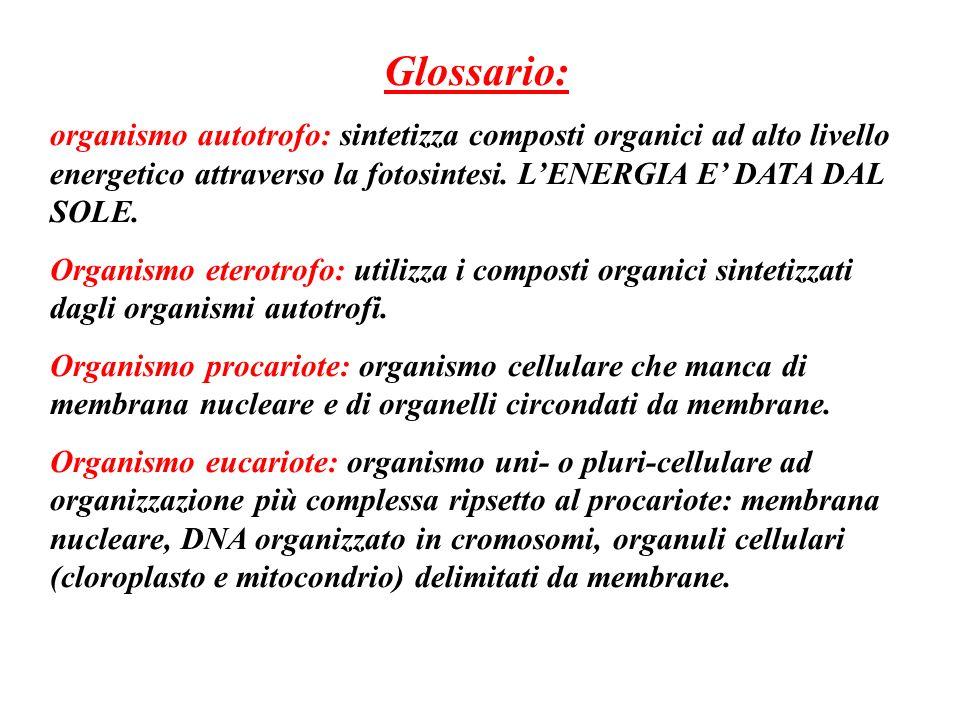 Glossario: organismo autotrofo: sintetizza composti organici ad alto livello energetico attraverso la fotosintesi. L'ENERGIA E' DATA DAL SOLE.
