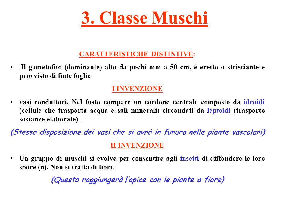 3. Classe Muschi CARATTERISTICHE DISTINTIVE: