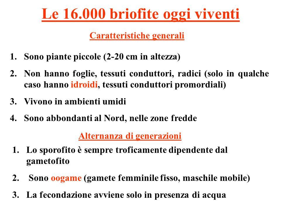 Le 16.000 briofite oggi viventi