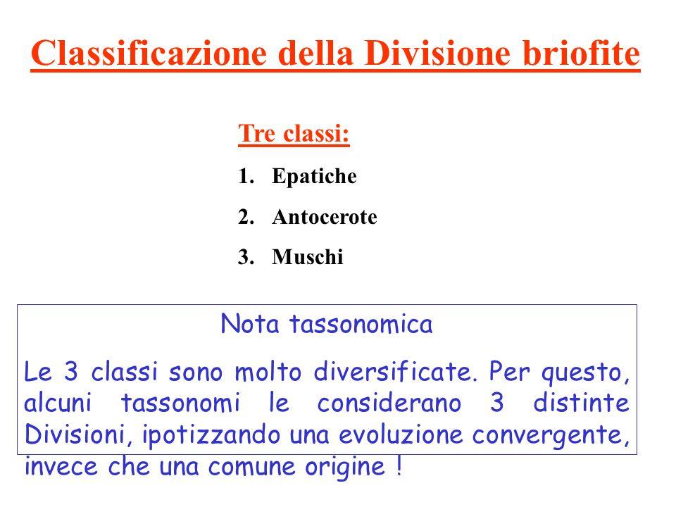 Classificazione della Divisione briofite