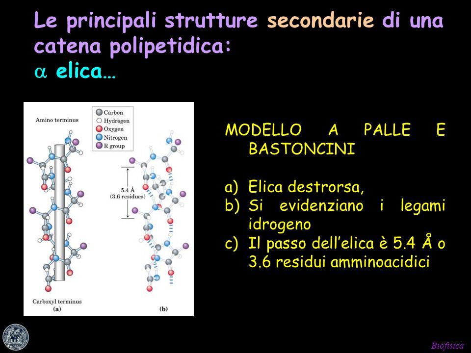 Le principali strutture secondarie di una catena polipetidica:  elica…