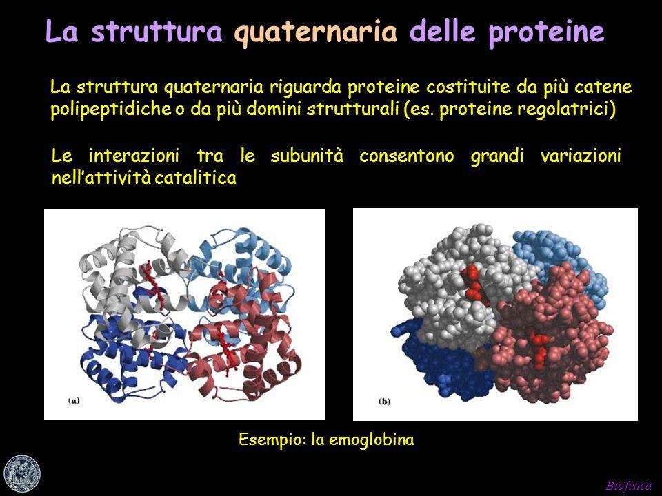 La struttura quaternaria delle proteine