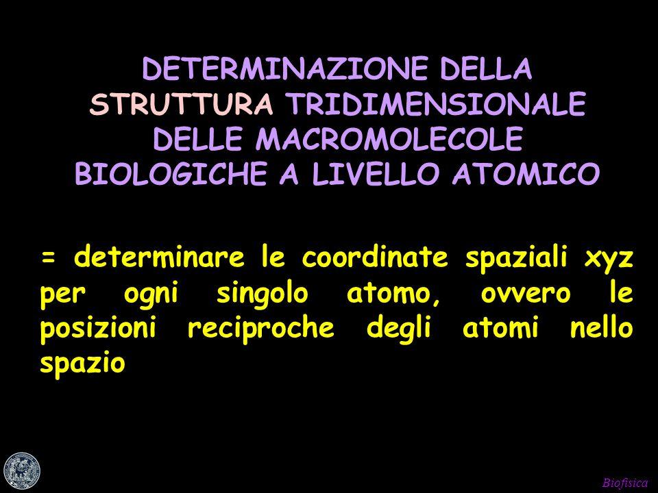 DETERMINAZIONE DELLA STRUTTURA TRIDIMENSIONALE DELLE MACROMOLECOLE BIOLOGICHE A LIVELLO ATOMICO