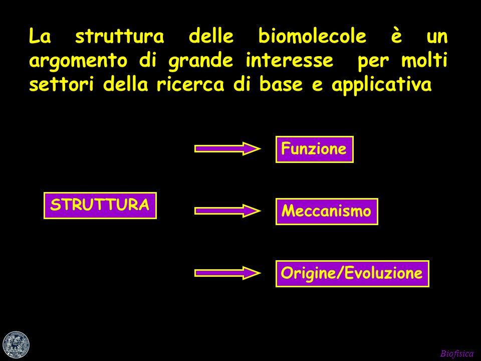 La struttura delle biomolecole è un argomento di grande interesse per molti settori della ricerca di base e applicativa