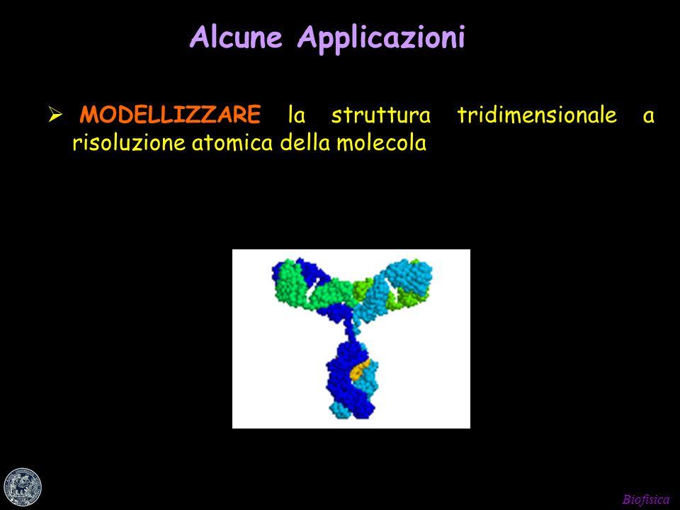 Alcune Applicazioni MODELLIZZARE la struttura tridimensionale a risoluzione atomica della molecola