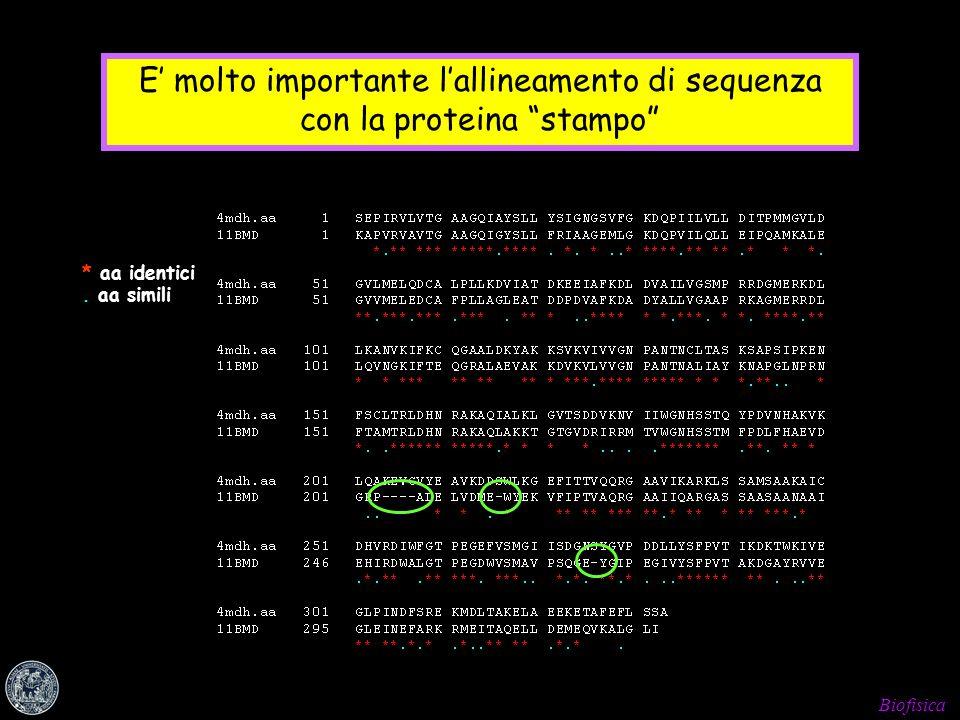 E' molto importante l'allineamento di sequenza con la proteina stampo