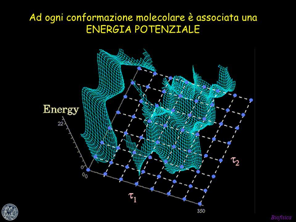 Ad ogni conformazione molecolare è associata una