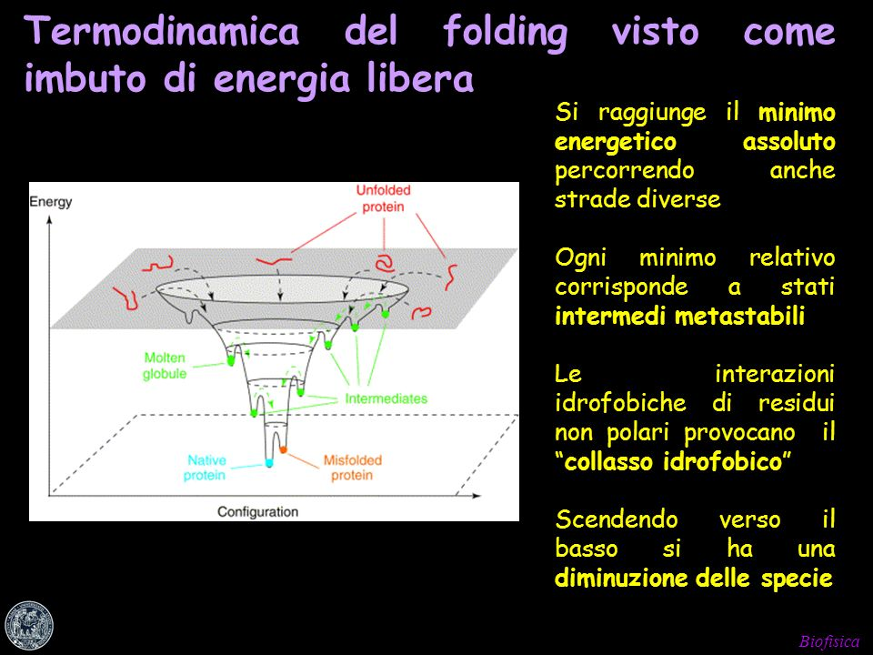 Termodinamica del folding visto come imbuto di energia libera