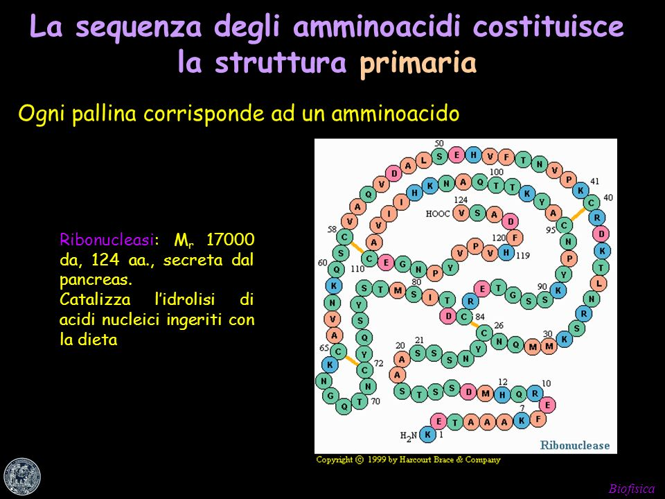 La sequenza degli amminoacidi costituisce la struttura primaria
