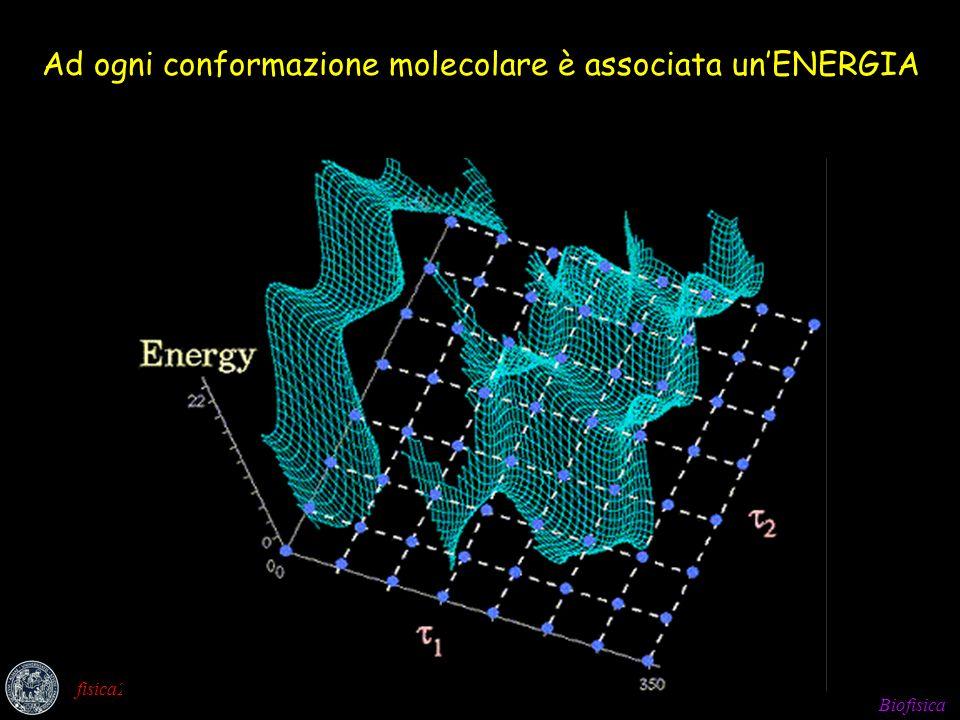 Ad ogni conformazione molecolare è associata un'ENERGIA