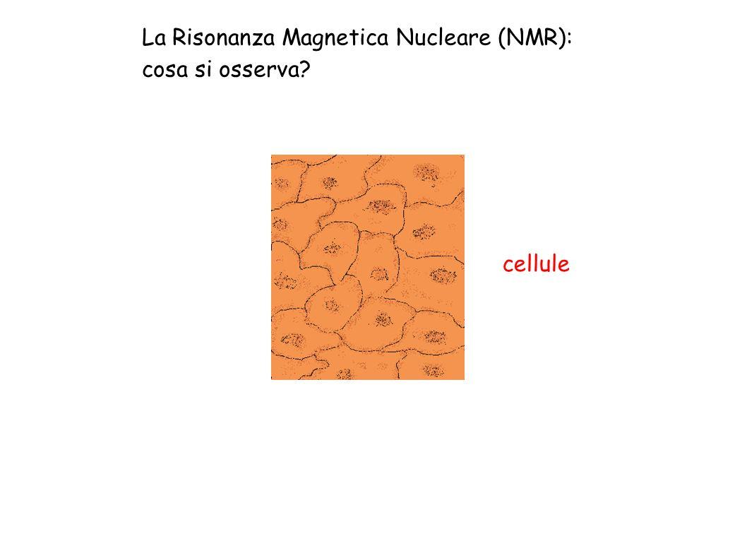 La Risonanza Magnetica Nucleare (NMR):