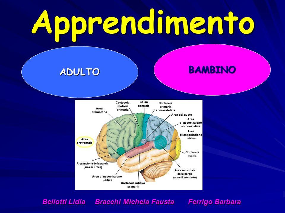 Apprendimento BAMBINO ADULTO