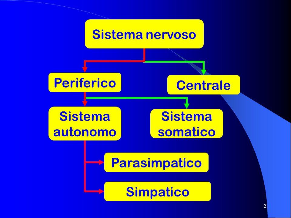 Sistema nervoso Periferico Centrale Sistema autonomo Sistema somatico Parasimpatico Simpatico