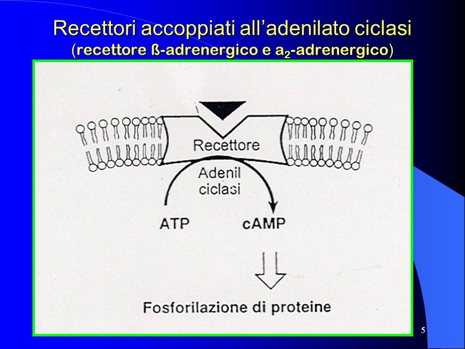 Recettori accoppiati all'adenilato ciclasi (recettore ß-adrenergico e a2-adrenergico)