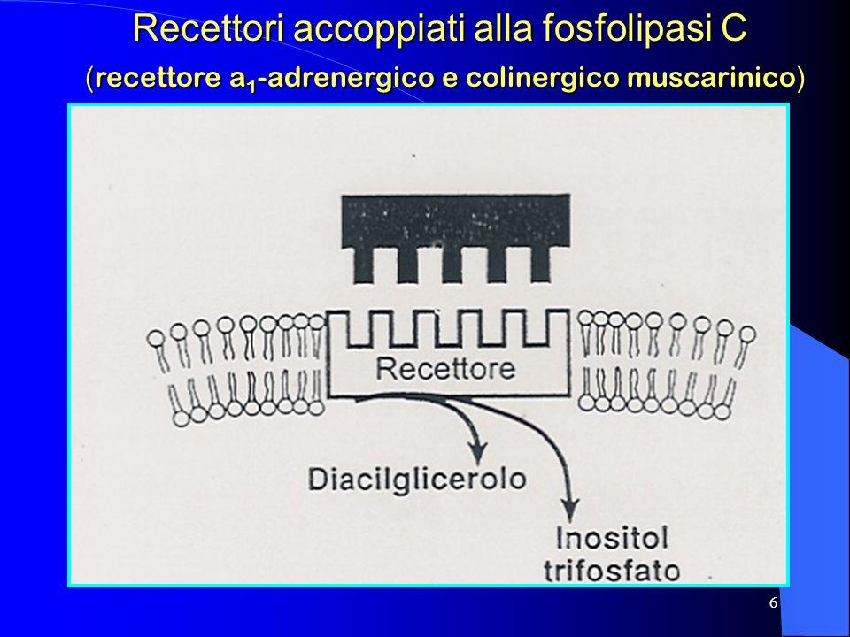 Recettori accoppiati alla fosfolipasi C (recettore a1-adrenergico e colinergico muscarinico)