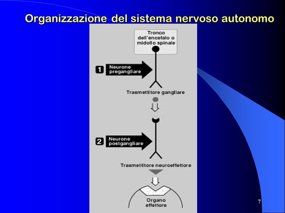 Organizzazione del sistema nervoso autonomo