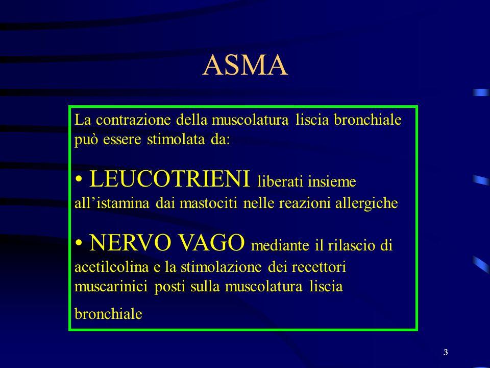 ASMA La contrazione della muscolatura liscia bronchiale può essere stimolata da:
