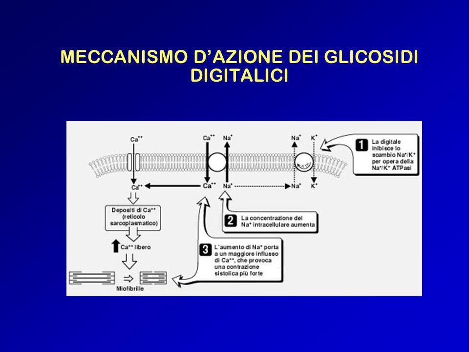 MECCANISMO D'AZIONE DEI GLICOSIDI DIGITALICI