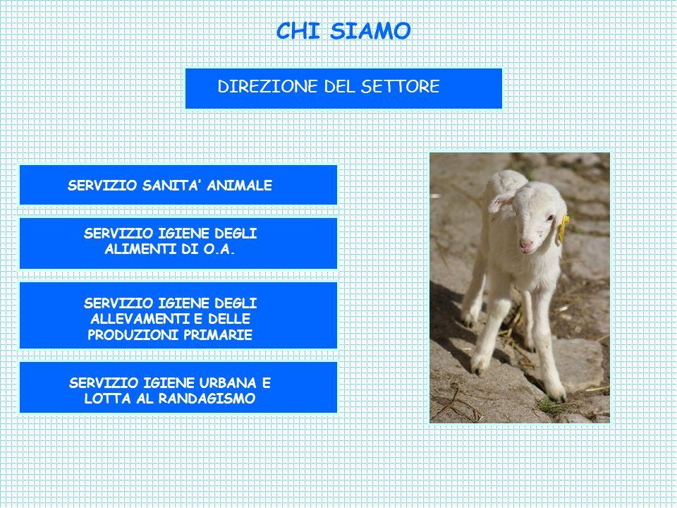 CHI SIAMO DIREZIONE DEL SETTORE SERVIZIO SANITA' ANIMALE