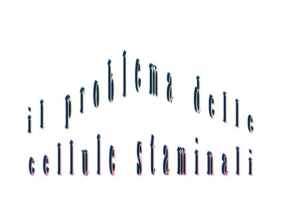 il problema delle cellule staminali