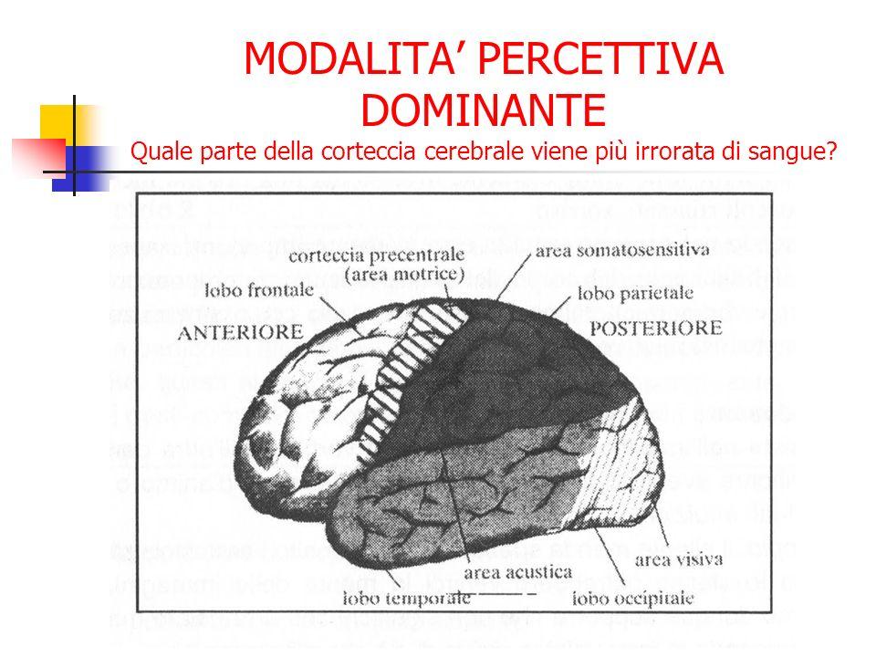 MODALITA' PERCETTIVA DOMINANTE Quale parte della corteccia cerebrale viene più irrorata di sangue