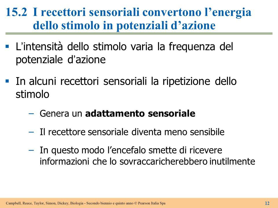 15.2 I recettori sensoriali convertono l'energia dello stimolo in potenziali d'azione
