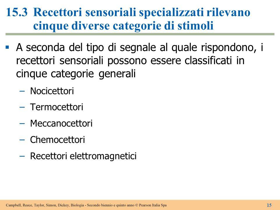 15.3 Recettori sensoriali specializzati rilevano cinque diverse categorie di stimoli