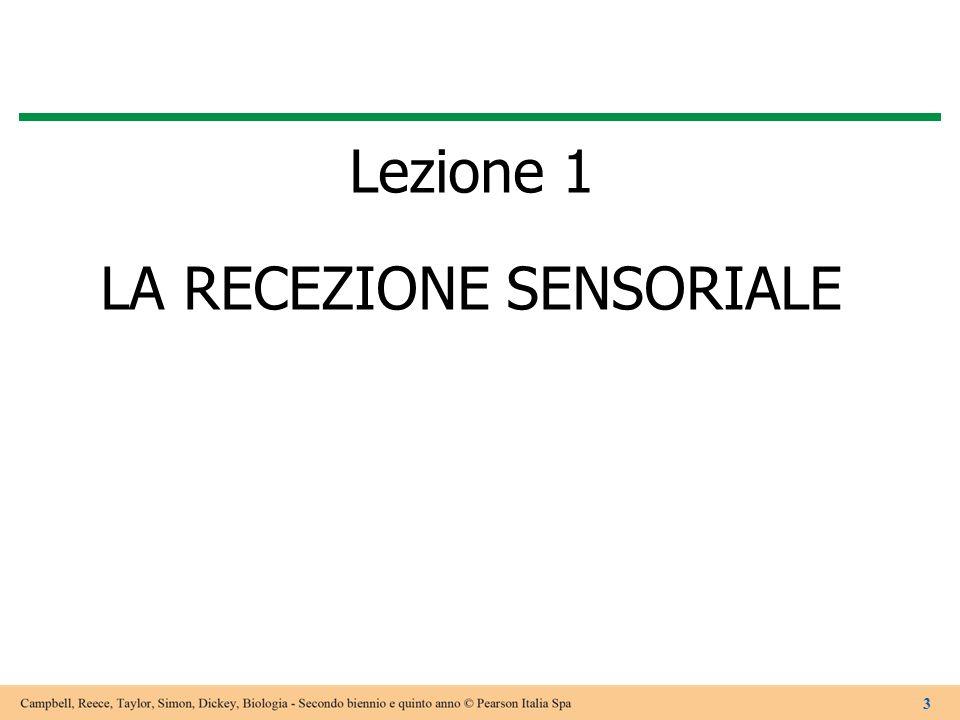 Lezione 1 LA RECEZIONE SENSORIALE