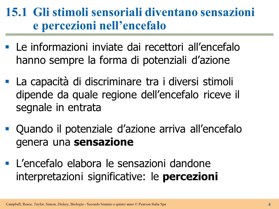15.1 Gli stimoli sensoriali diventano sensazioni e percezioni nell'encefalo