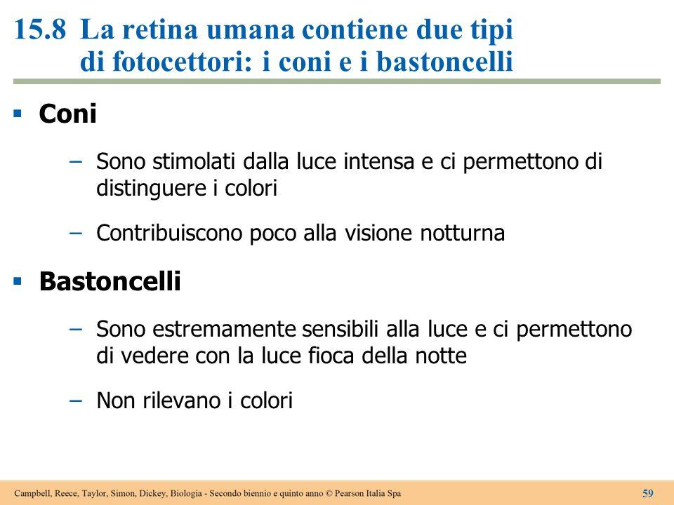 15.8 La retina umana contiene due tipi di fotocettori: i coni e i bastoncelli
