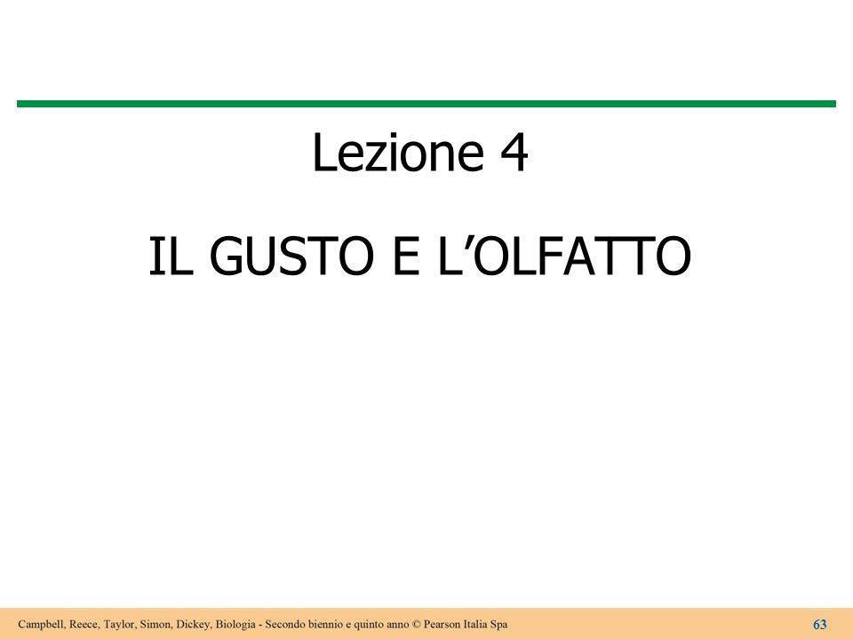 Lezione 4 IL GUSTO E L'OLFATTO