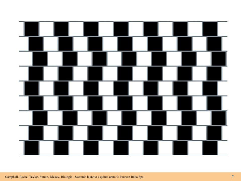Figura 15.1 Alcune illusioni ottiche Linee oblique o parallele