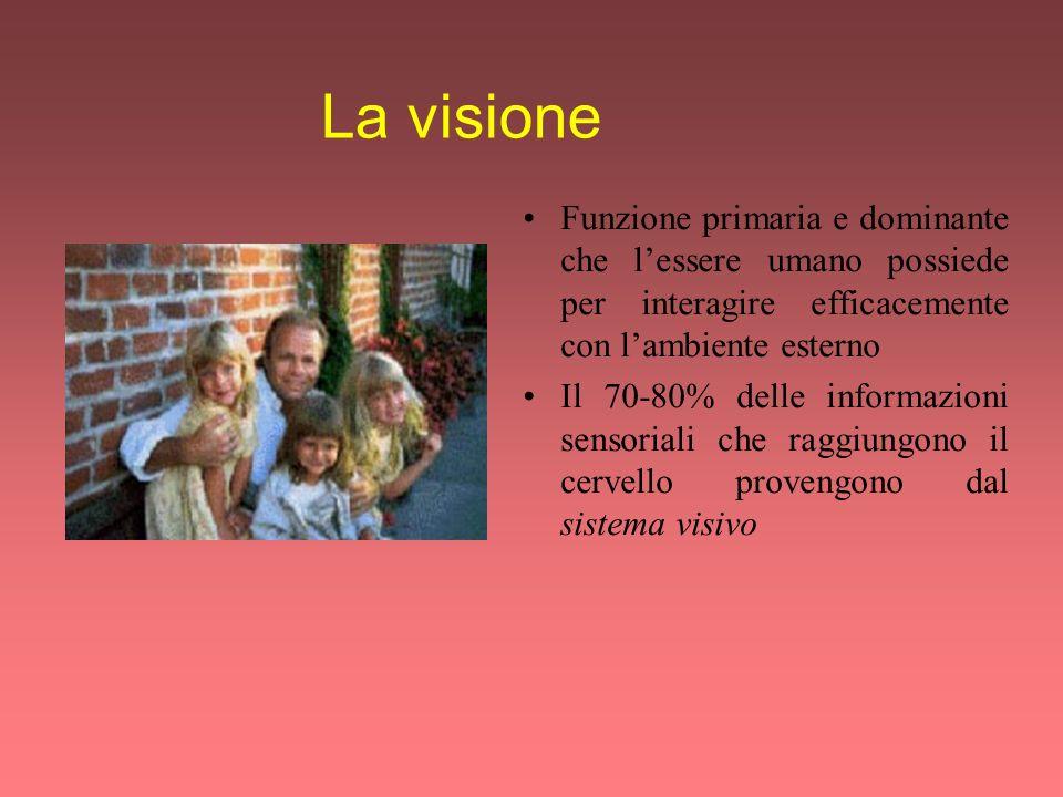 La visione Funzione primaria e dominante che l'essere umano possiede per interagire efficacemente con l'ambiente esterno.