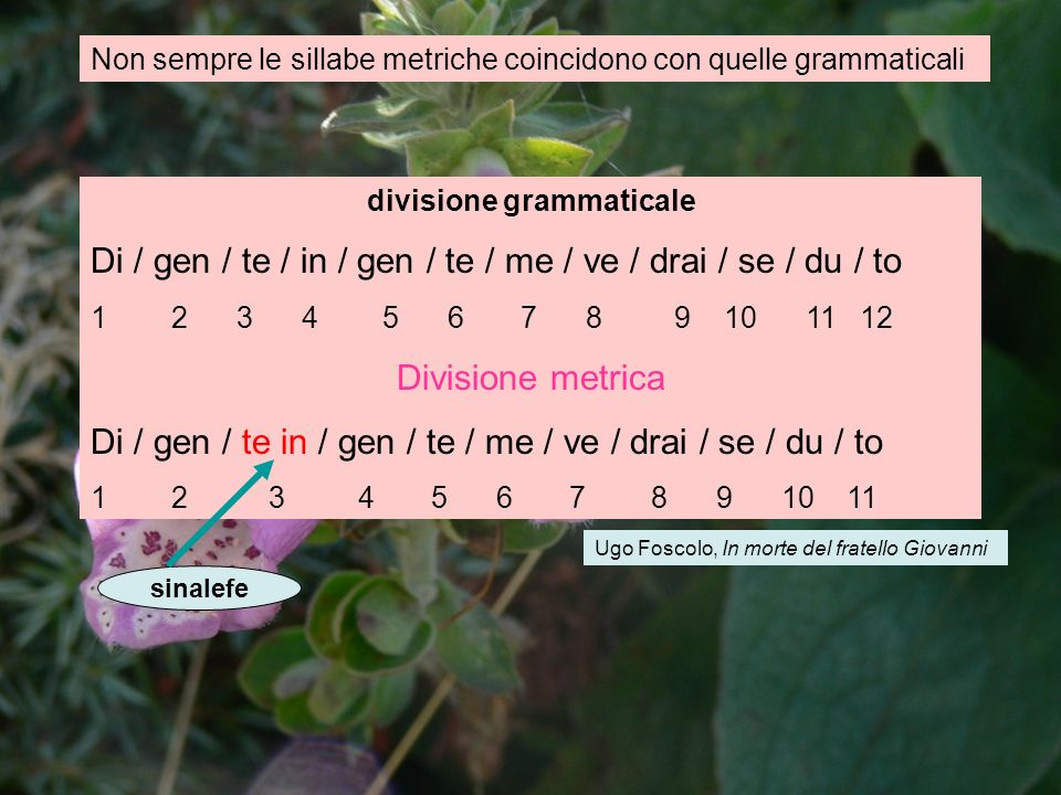 divisione grammaticale