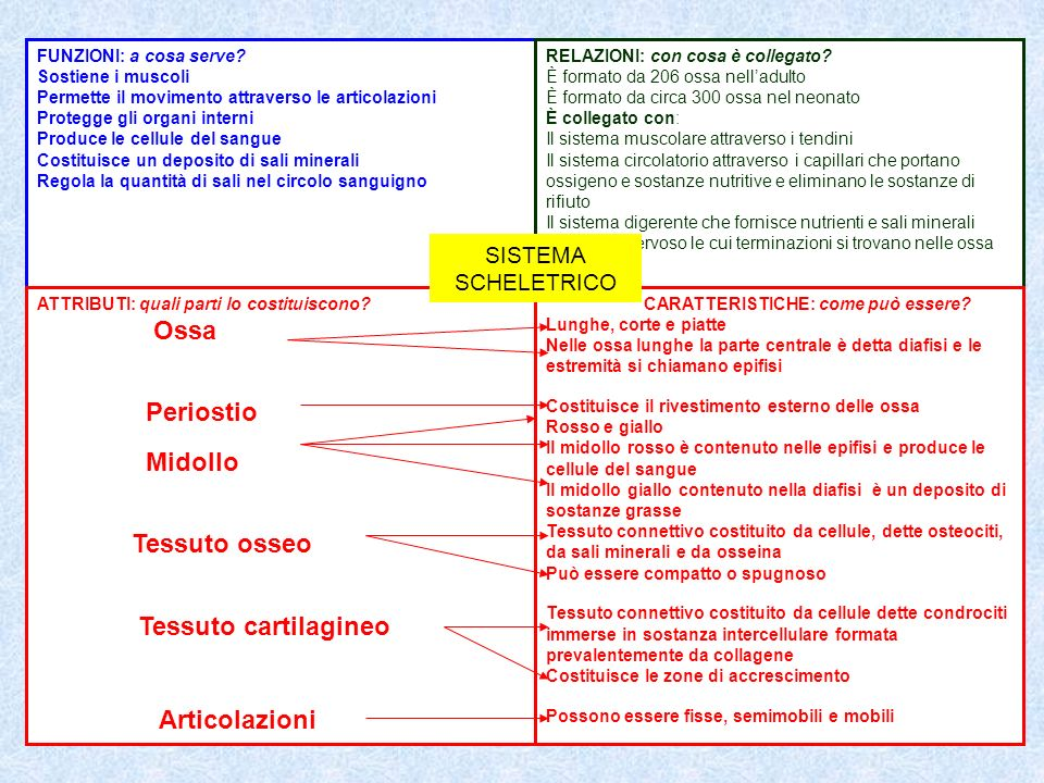 Ossa Periostio Midollo Tessuto osseo Tessuto cartilagineo