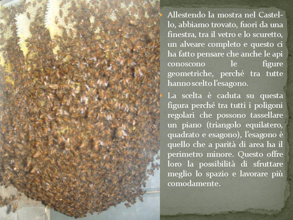Allestendo la mostra nel Castel- lo, abbiamo trovato, fuori da una finestra, tra il vetro e lo scuretto, un alveare completo e questo ci ha fatto pensare che anche le api conoscono le figure geometriche, perché tra tutte hanno scelto l'esagono.