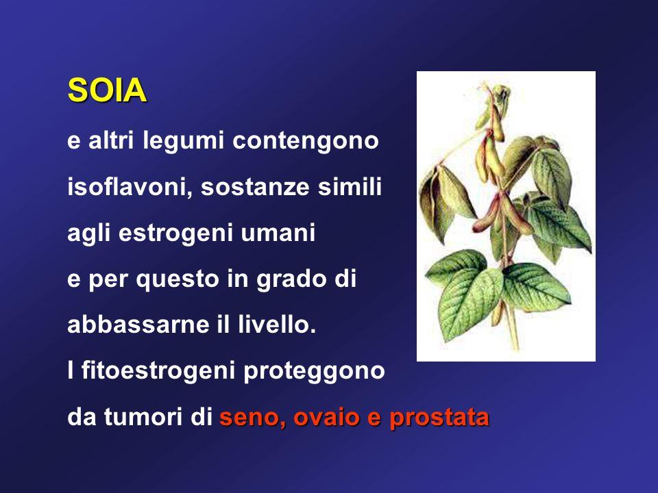 SOIA e altri legumi contengono isoflavoni, sostanze simili