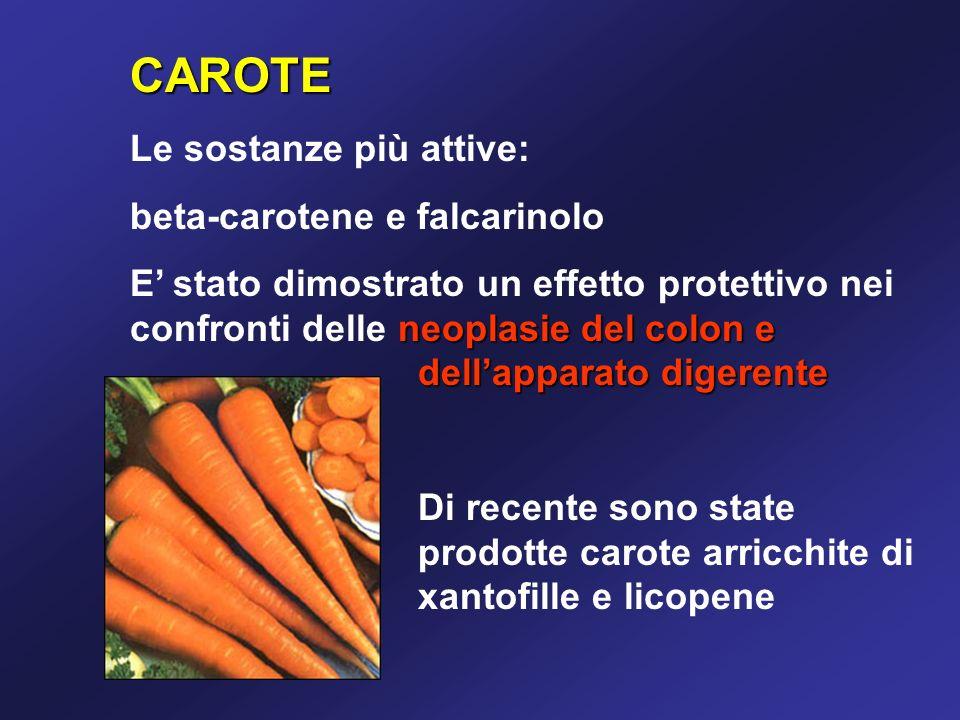 CAROTE Le sostanze più attive: beta-carotene e falcarinolo
