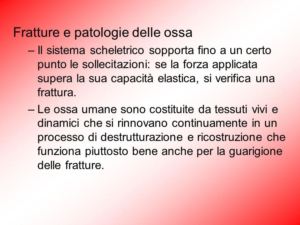 Fratture e patologie delle ossa