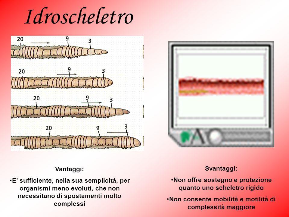 Idroscheletro Vantaggi: Svantaggi: