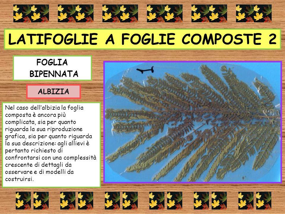 LATIFOGLIE A FOGLIE COMPOSTE 2