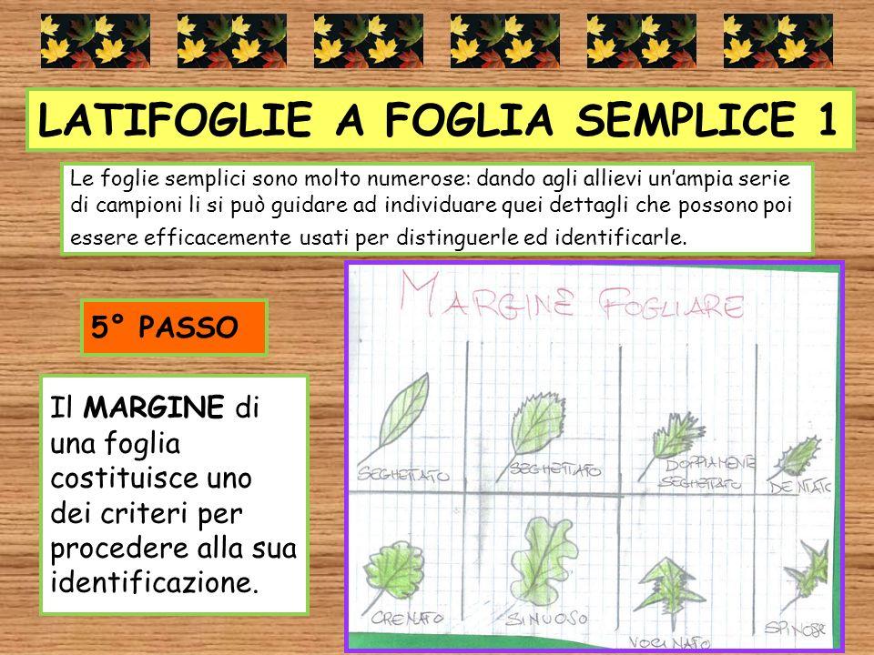 LATIFOGLIE A FOGLIA SEMPLICE 1