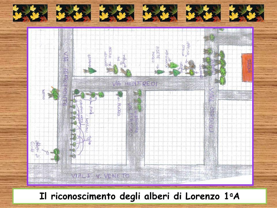 Il riconoscimento degli alberi di Lorenzo 1aA