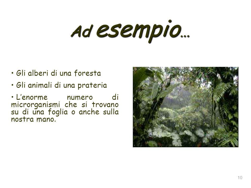 Ad esempio… Gli alberi di una foresta Gli animali di una prateria