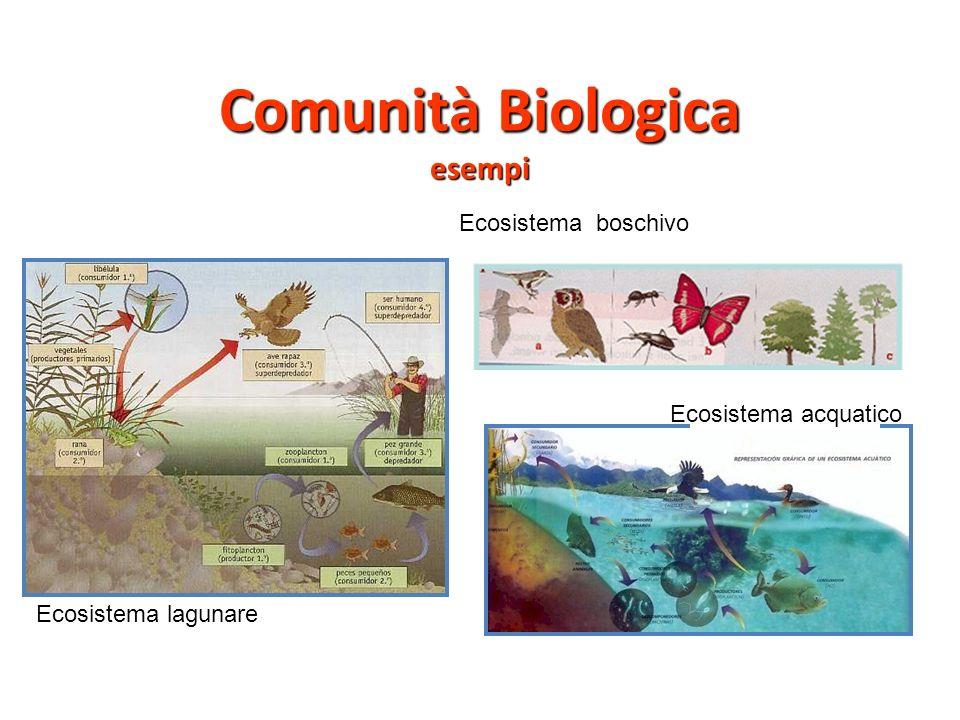 Comunità Biologica esempi