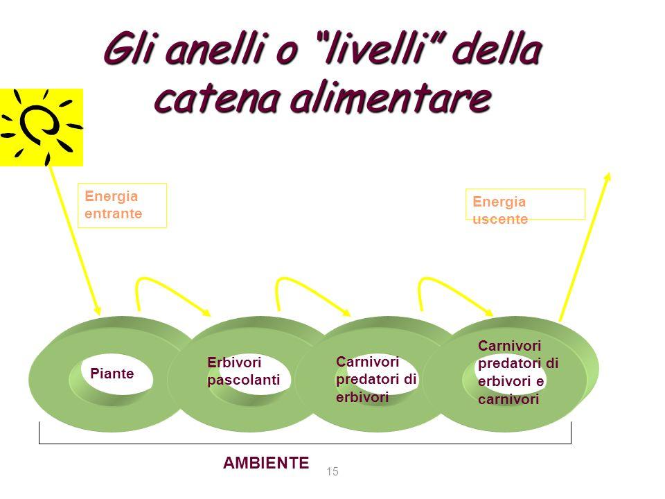Gli anelli o livelli della catena alimentare