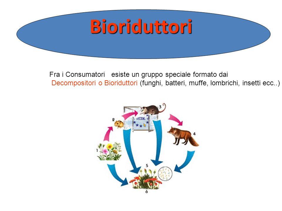 Bioriduttori Fra i Consumatori esiste un gruppo speciale formato dai
