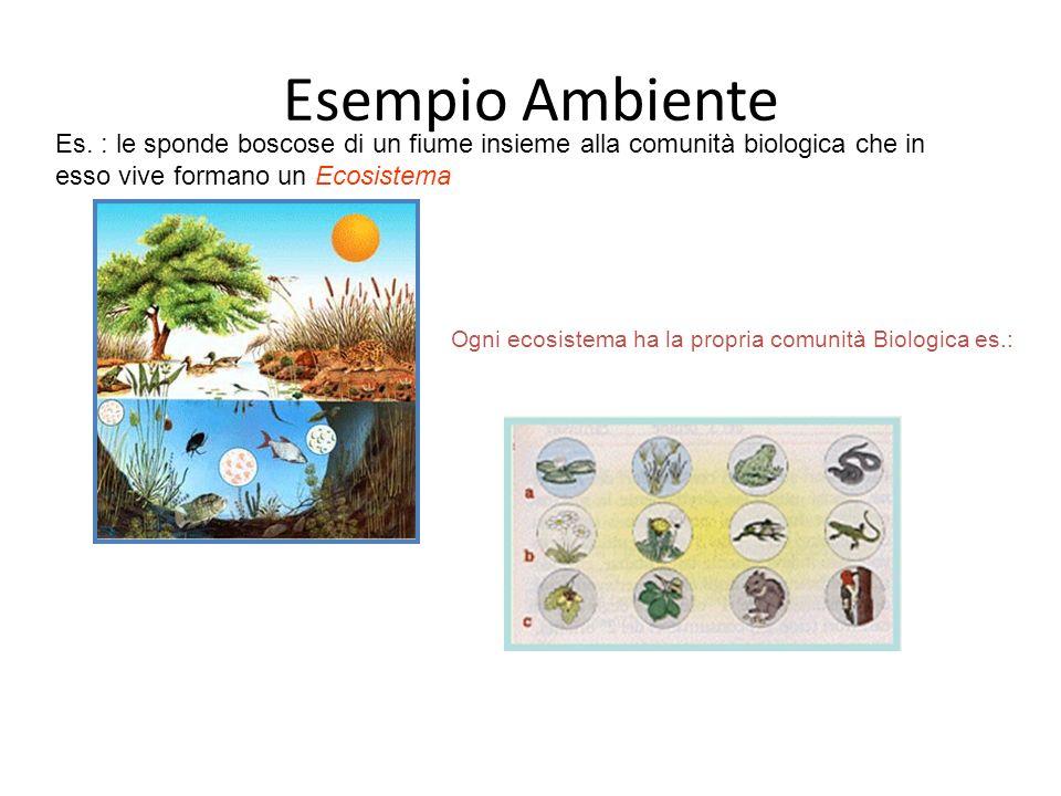 Ogni ecosistema ha la propria comunità Biologica es.: