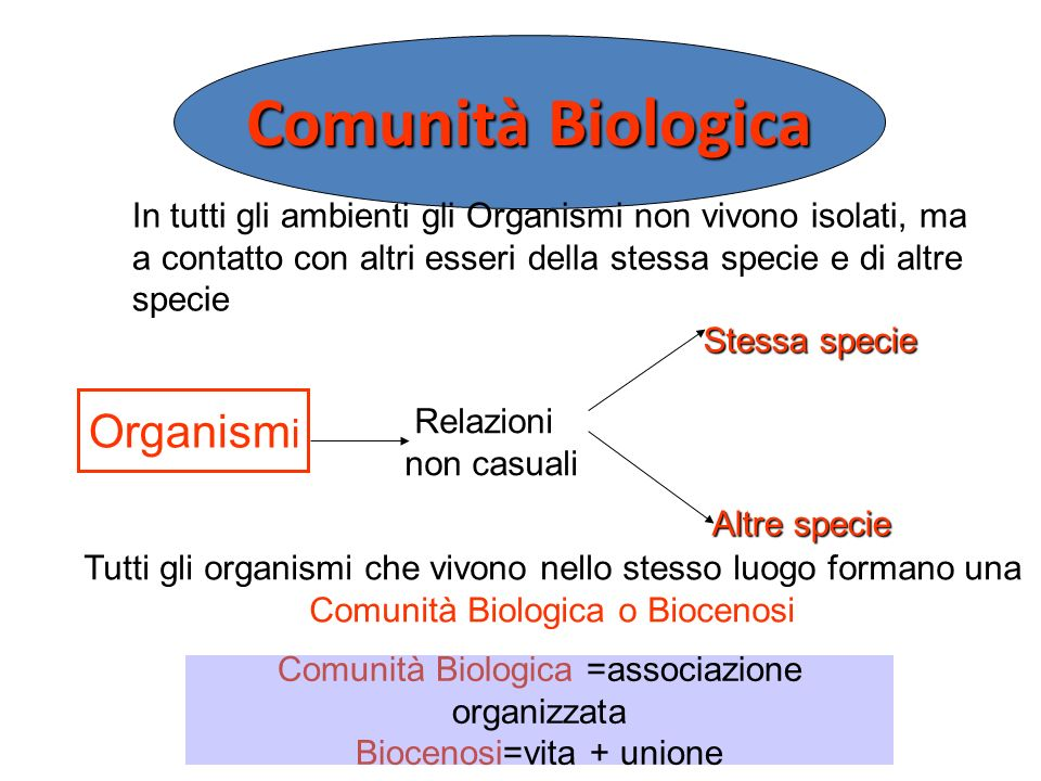 Comunità Biologica =associazione organizzata Biocenosi=vita + unione