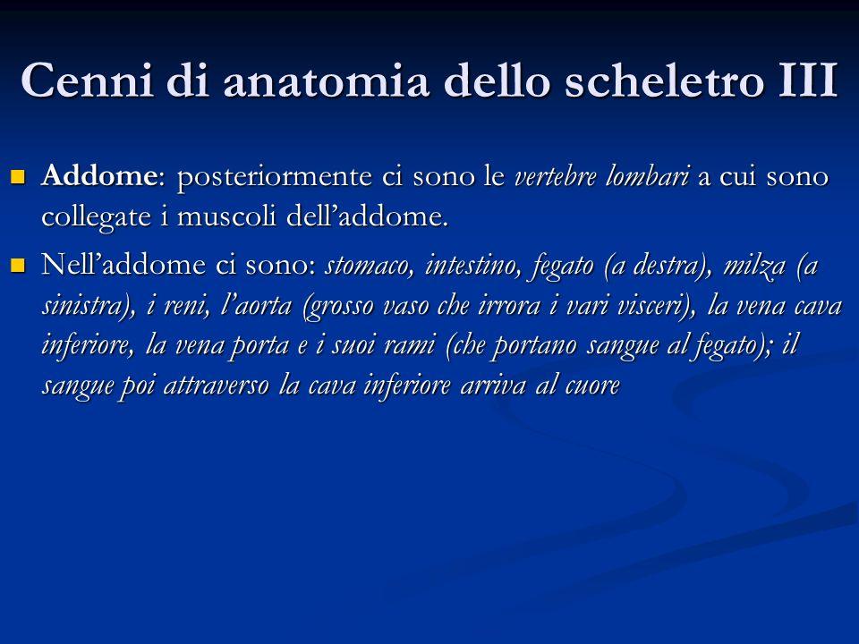 Cenni di anatomia dello scheletro III
